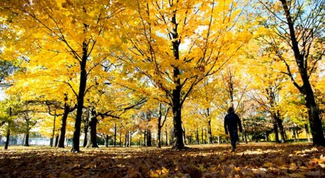 Meteorologist says Canadians will see mild fall with a steady transition to winter