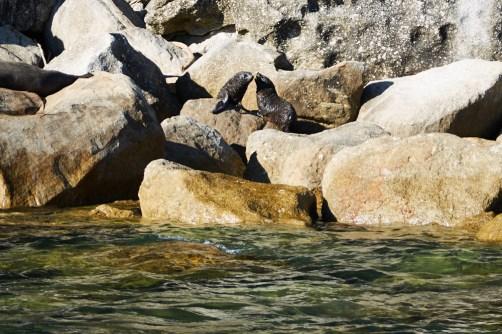 See Lions, Abel Tasman, Miles and Shores Reiseblog, Seelöwen, Babys
