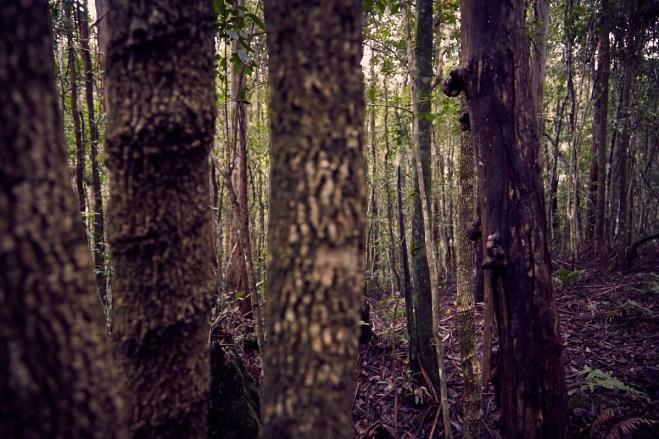 Regenwald, Bäume, Barrington Tops Nationalpark, Regen, Regenwald, Urwald, regnen