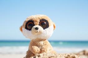 Ed, Erdmännchen, Stofftier, Kangaroo Island, Strand, beach, Wasser, Meer, About Miles and Shores Reiseblog