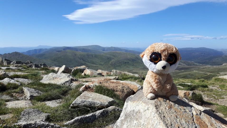 Ed, das Erdmännchen, Berg, Wandern, Australien