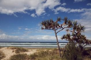 Gold Coast, Strand, Baum, Pflanze, sunny day, sonniger Tag, Urlaub, reisen, Osterferien, Party, Australien, Australia