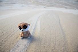 Sanddünen, Sand, Wüste, Morimi Nationalpark, Strand, Ed, das Erdmännchen, Reisemaskottchenm, Roadtrip