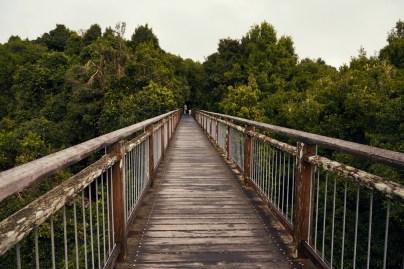 Skywalk, Aussicht, Dorrigo National Park, Australia, Australien, Nationalpark, Brücke, Walk, Ausflug, Tagesausflug