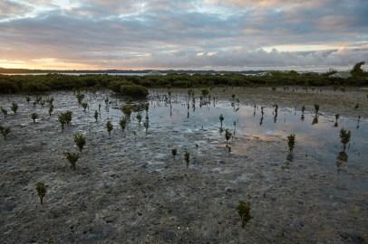 Strand, Ebbe, Meer, Wilsons Promontory, Nationalpark, National Park, Millers Landing, Track,