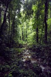 Dorrigo National Park, Australia, Australien, Wanderweg, wandern, Aussicht, Nationalpark, view, Bach, Wald