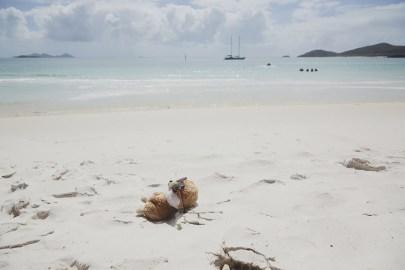 Ed, das Erdmännchen, Ed in Australien, Maskottchen, Reise, Reisemaskottchen, Miles and Shores, Australien, Whitehaven Beach, Australia