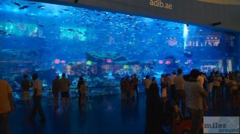 Aquarium - Dubai Mall