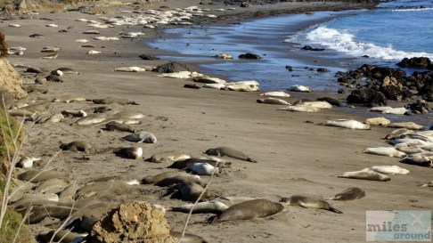 Elephant Seal View Point
