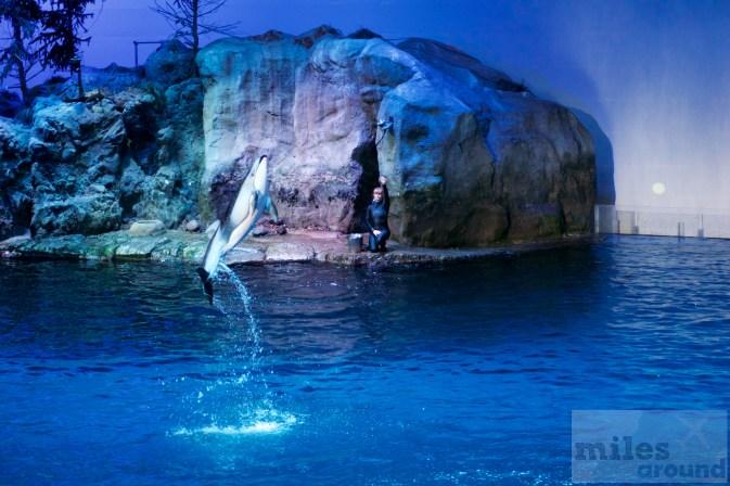 Show im Abbott Oceanarium