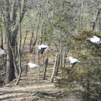 Spring Creek