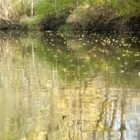 Nippersink Creek