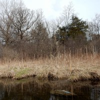 Rock Creek