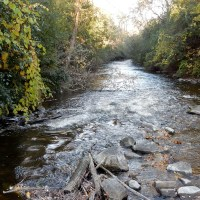 Mullet River
