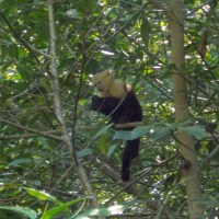 Matapalo Mangroves
