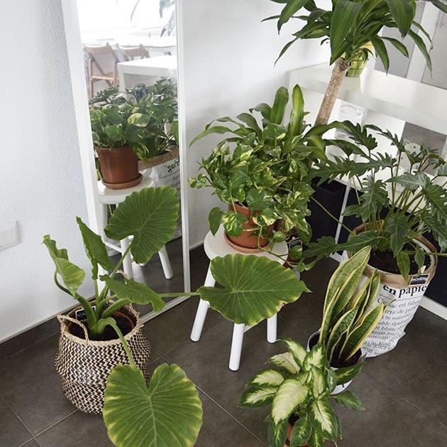 Evi ücretsiz ve terk etmeden dekore edecek bitkiler
