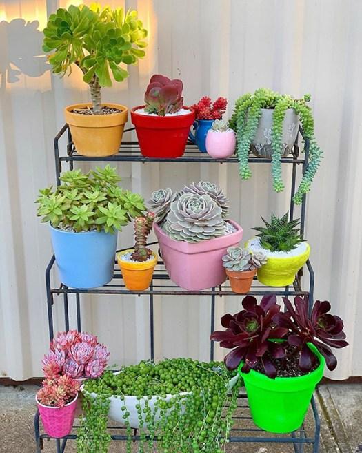 Un soporte de metal lleno de plantas suculentas