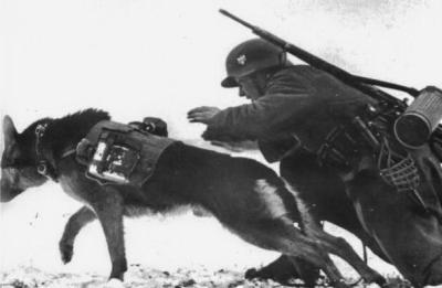 Сопутствующая собака солдата вермахта
