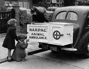 A New type of animal ambulance which is a big cabinet fitted on the back of any motor car and can be used in any emergency. It w
