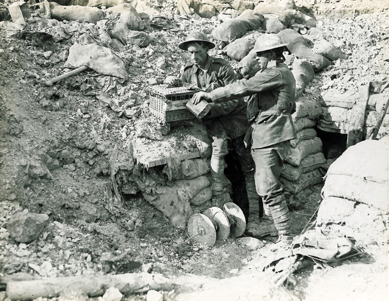 Encounter With Pigeon On Military Ridge >> Pigeons At Passchendaele Military History Matters