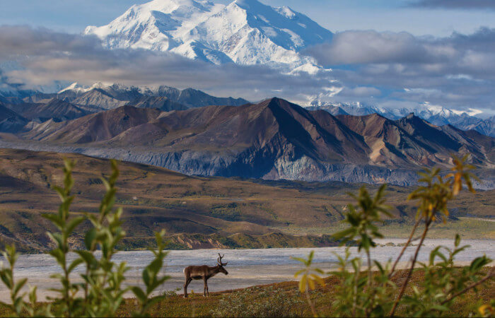 Alaska Cruise Military and Veteran Discount Alaska Cruise Tour Dealsto Denali
