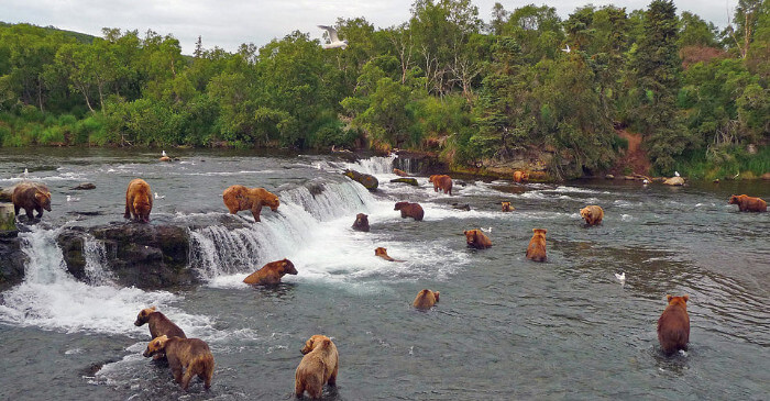 Alaska Cruise Discounts for Military and Veterans Brooks Falls Katmai National Park