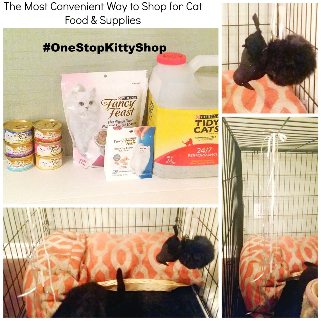 The Most Convenient Way to Shop for Cat Food & Supplies #OneStopKittyShop