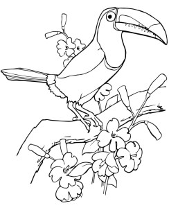 Coloring page toekan