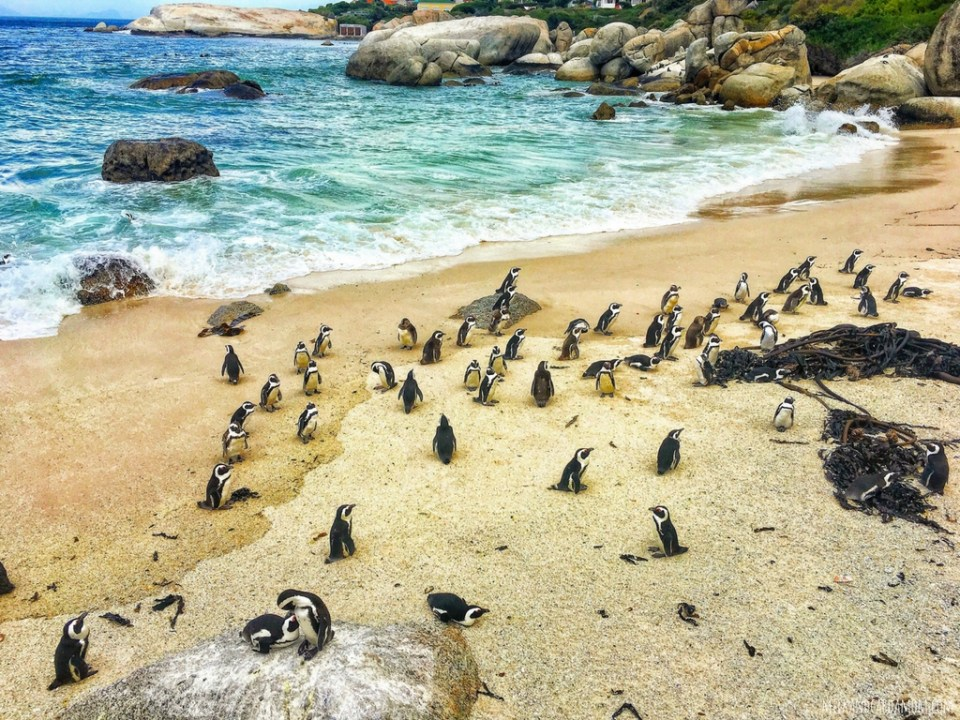 Road Trip- Cape Town to Cape Point