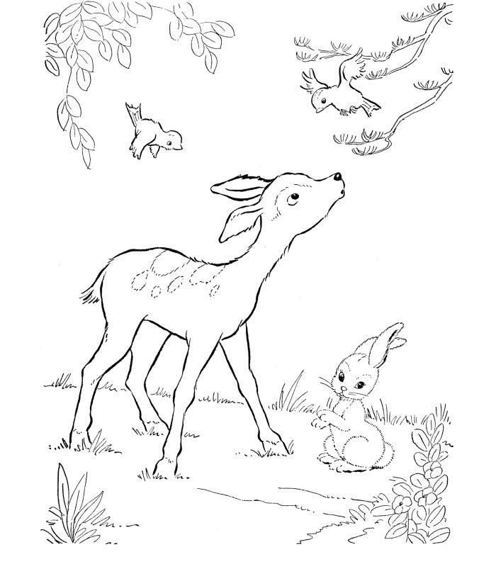 Deer Coloring Pages Photo