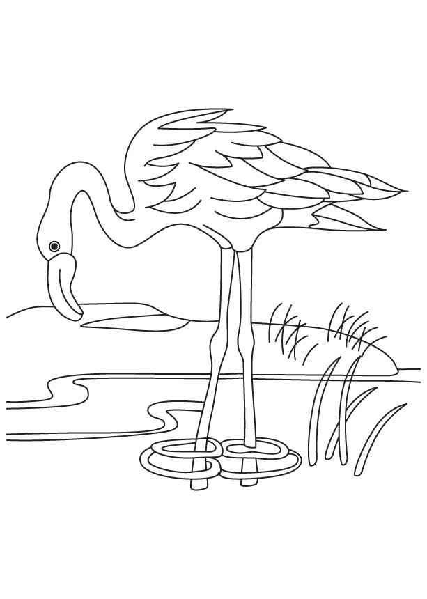 Baby Flamingo Coloring Pages