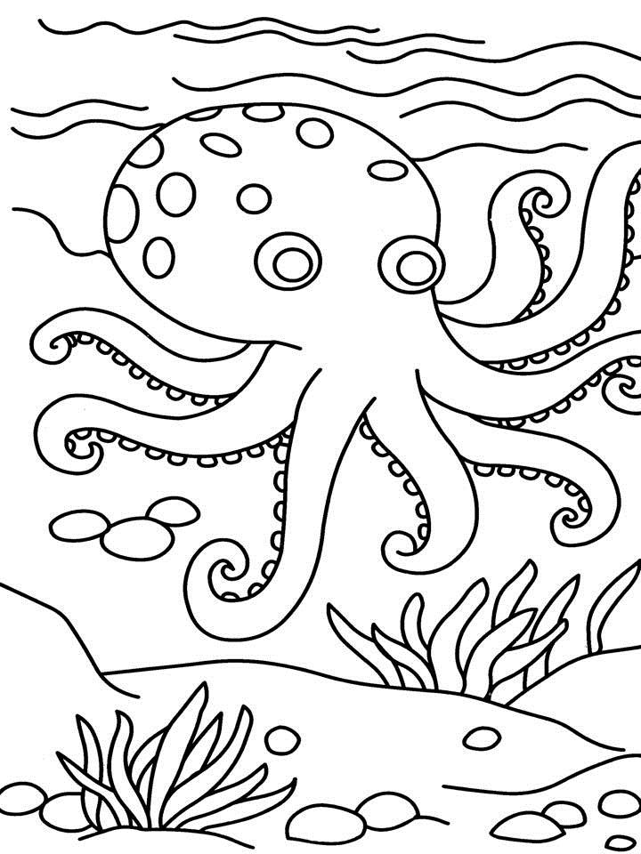 Coloring Page For Octopus