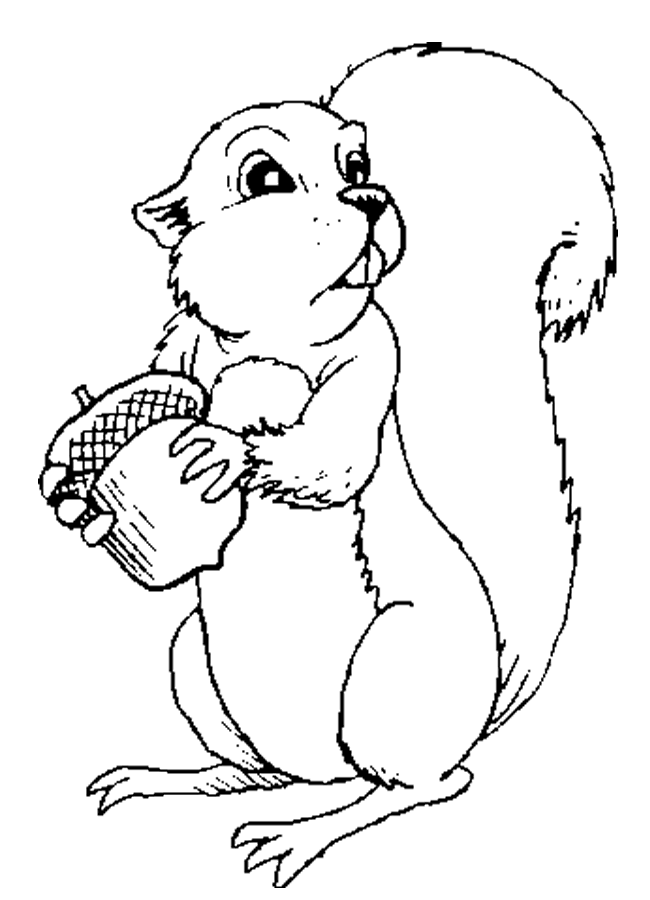 Squirrel Coloring Page For Adults Ideas