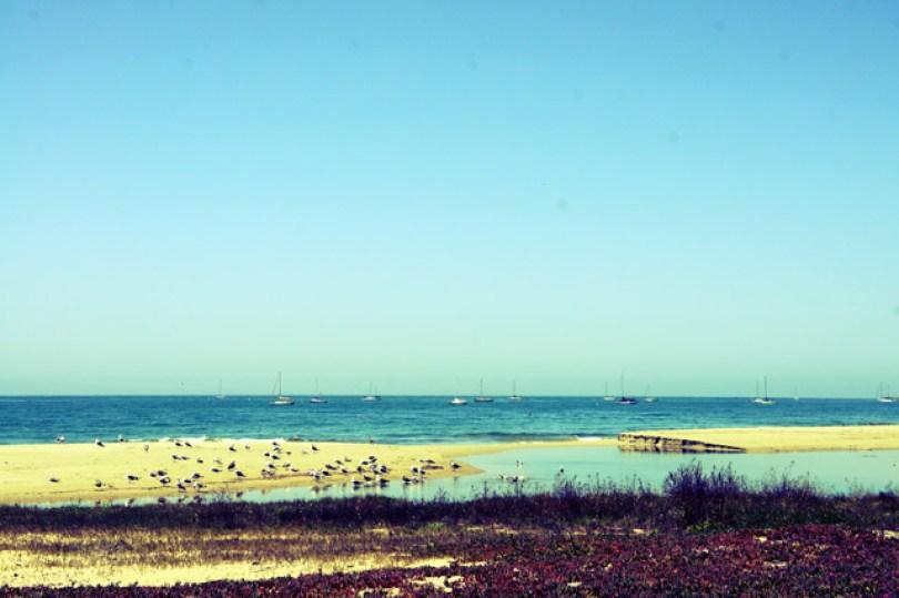 santa-barbara-beachside-birds