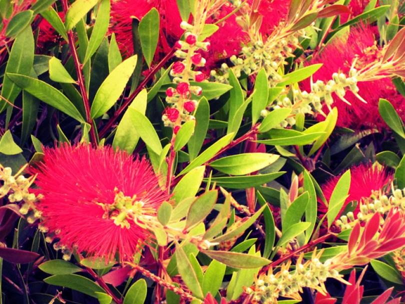 ventura-flora