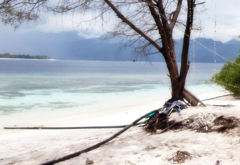 muay thai blog
