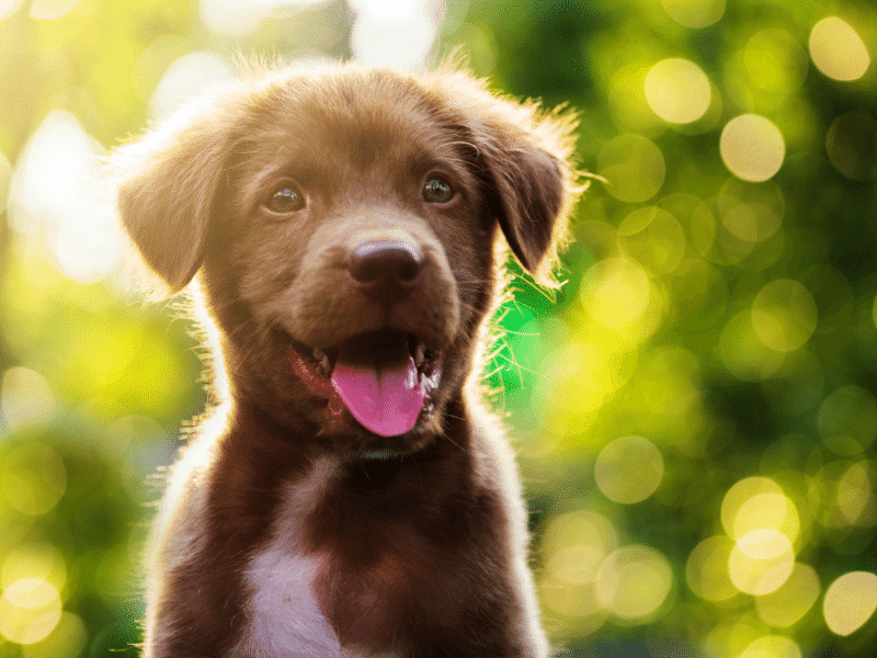 eco-friendly dog tips