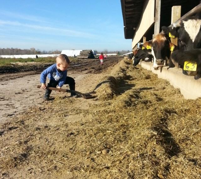 do farmers care for their cows?