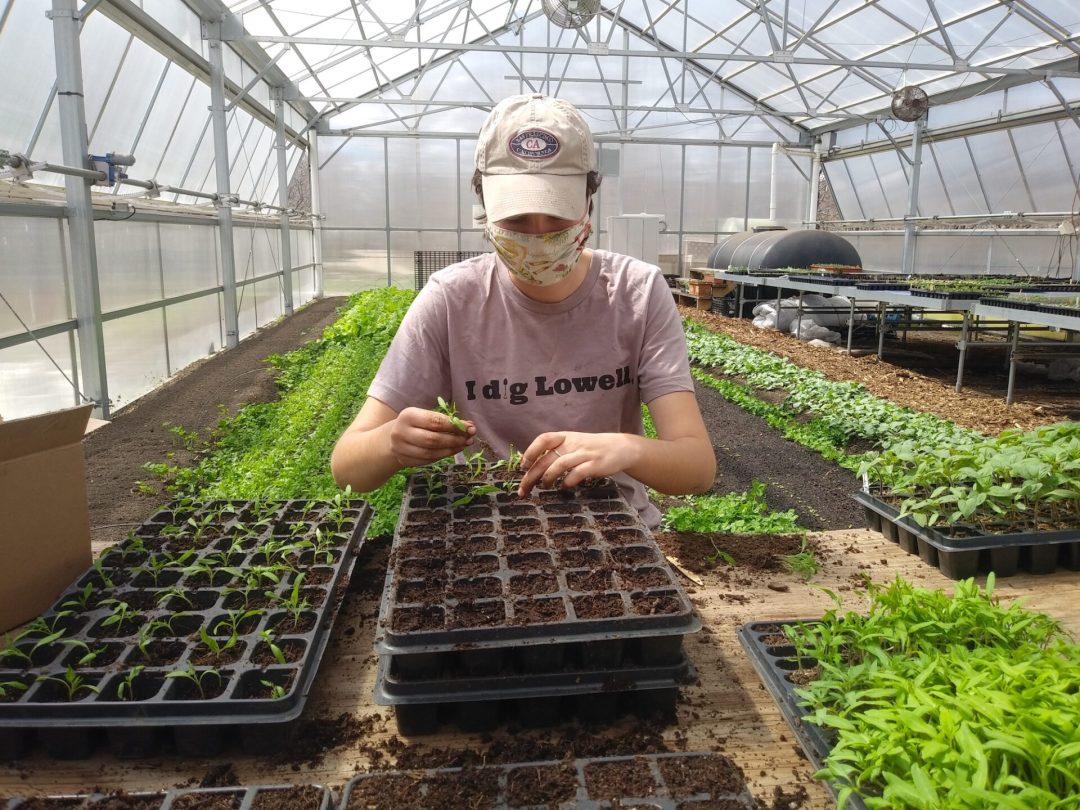 MCG Plant Sale, May 15