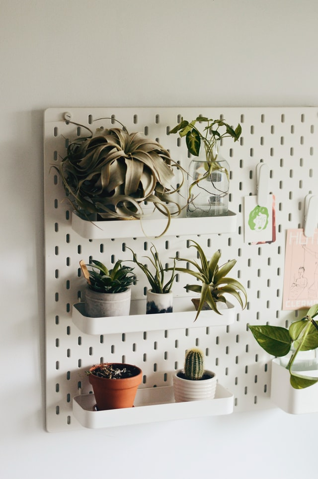 Super Easy House Plants You (Probably) Won't Kill
