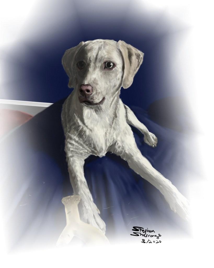 Portrait of Dodi, a dog