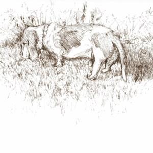 Basset Hound Ink Drawing