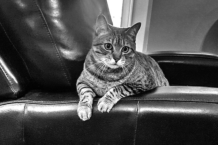 Cat on a chair at Miller Ad Agency