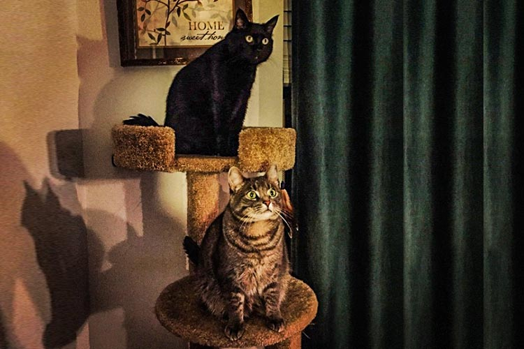 Two cats on cat post
