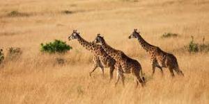 safari parc agadir