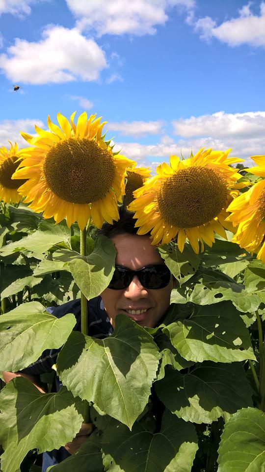 msolve_sunflower