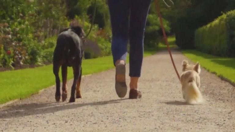 Beningborough Hall Dogs Allowed Milner Creative