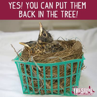 You Can Put Them Back in the Tree