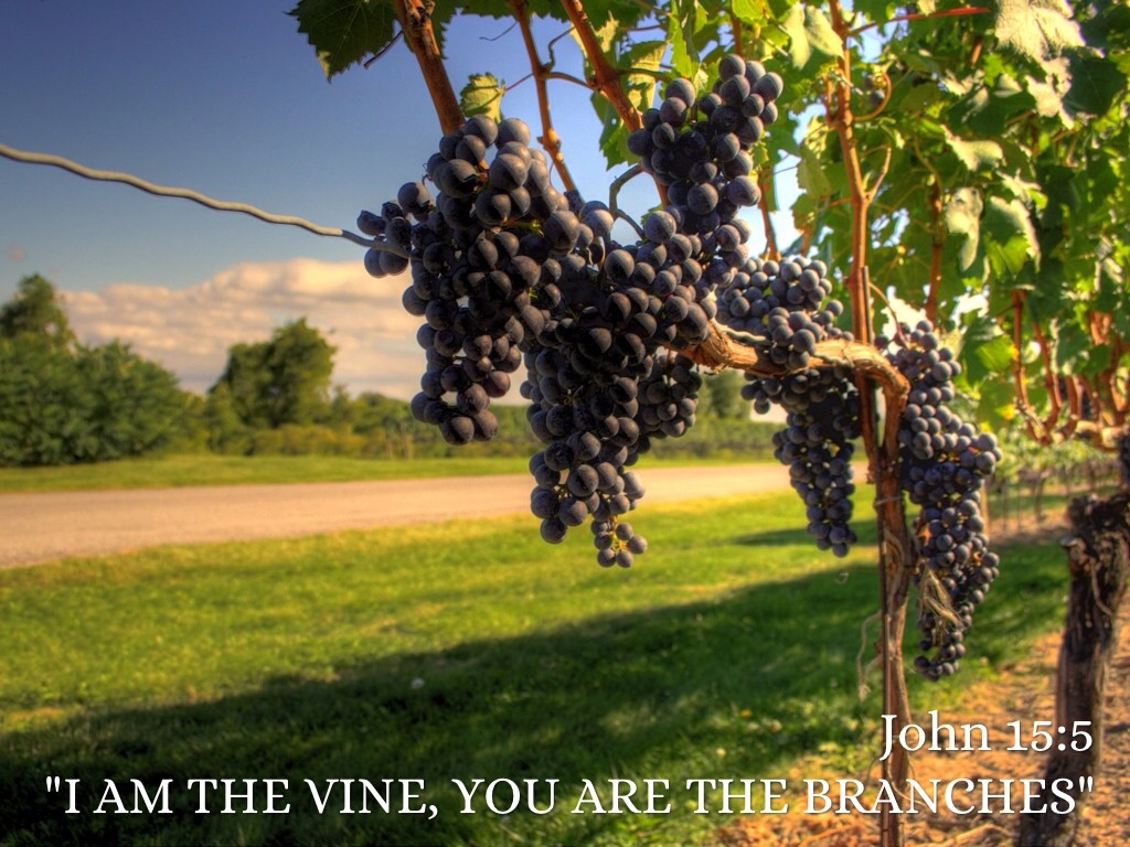Image result for I am the vine