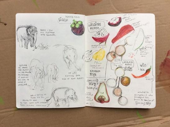 fruits and elephants